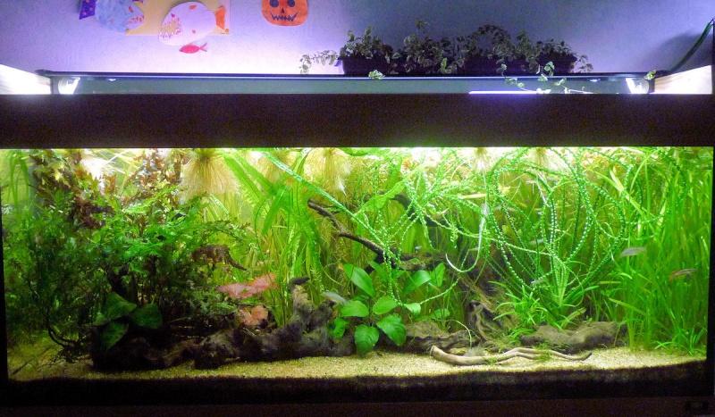 quelle plante sur aquarium page 2. Black Bedroom Furniture Sets. Home Design Ideas