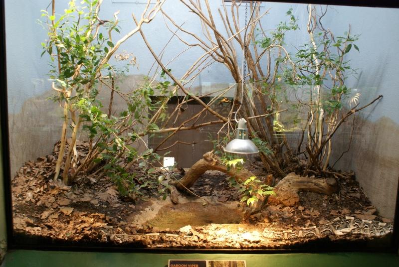 idee deco terrarium python