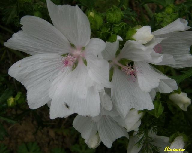 Transparence. dans Fleurs et plantes 640_p728