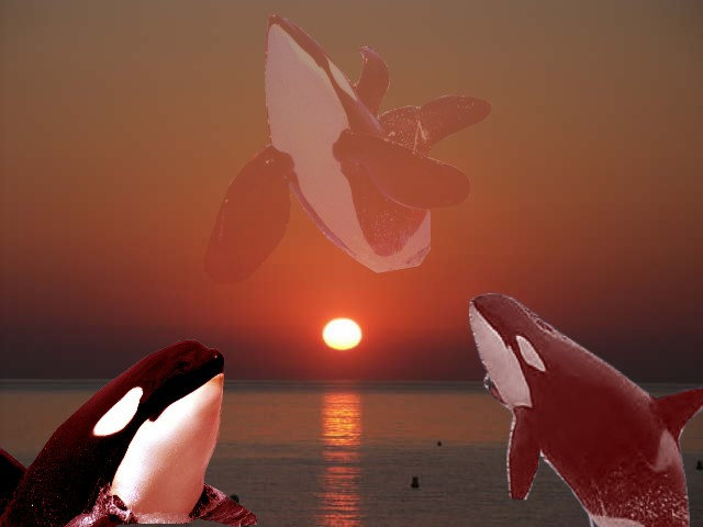 Nos Amis Les Orques
