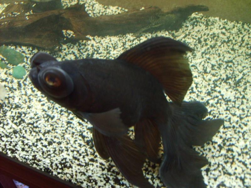 D pot blanc sur un telescope noir for Aquarium poisson rouge adulte
