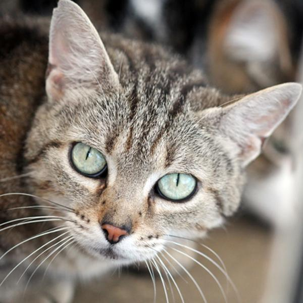 chat sexe gennevilliers