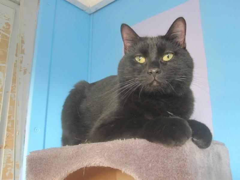 elvis chat noir n en 2014 nancy 54 meurthe et moselle. Black Bedroom Furniture Sets. Home Design Ideas