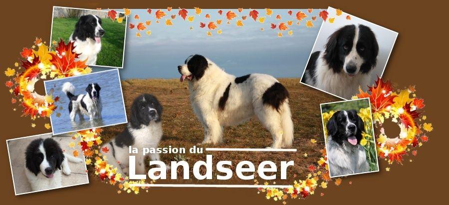 La passion du Landseer