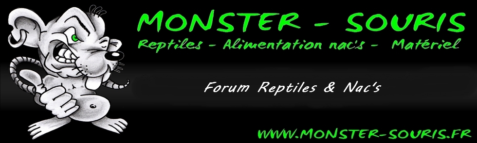 Monster-souris Forum