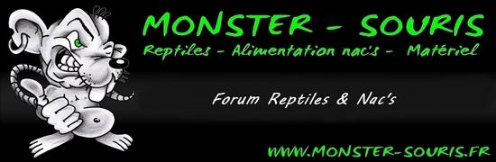 Nos transporteurs - Monster-souris