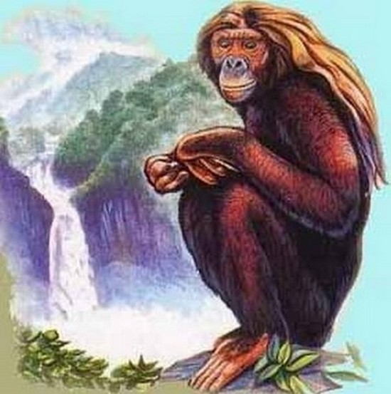 île de sumatra preuves Orang pendek sedapa hominidé inconnu grand primate cryptozoologie preuve Indonésie ADN