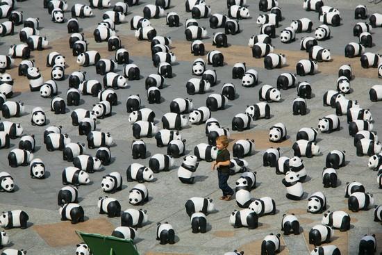 zoologie protection des animaux WWF 1600 pandas Bordeaux