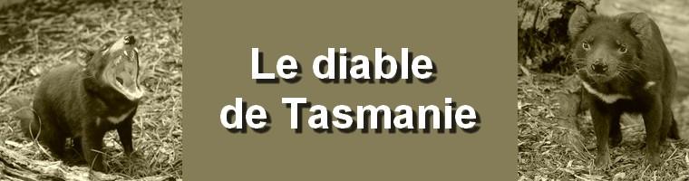 Zoologie forum diable de tasmanie Sarcophilus harrisii espèce menacée