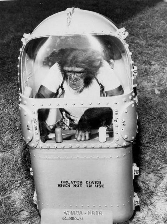 zoologie chimpanzé espace 1961 mémoire instantanée Nasa Ham