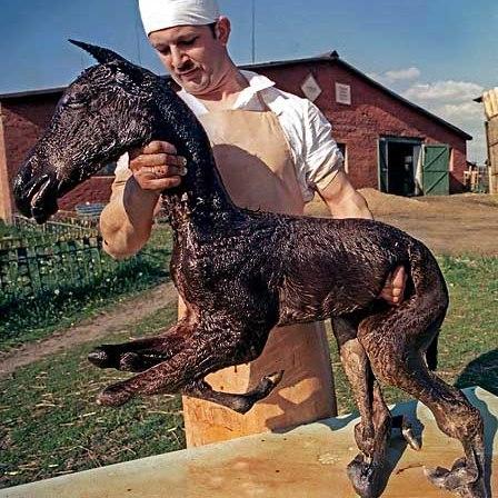 paléontologie malformation cheval à huit pattes poulain mal formé malformation Tchernobyl catastrophe nucléaire écologique 1986 forum reptile Igor Kostine photographie naissance de mutant Ukraine