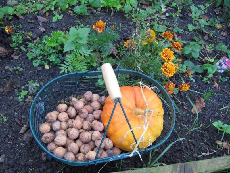 Th me du mois d 39 octobre 2015 jardins d 39 automne for Jardin lune octobre 2015