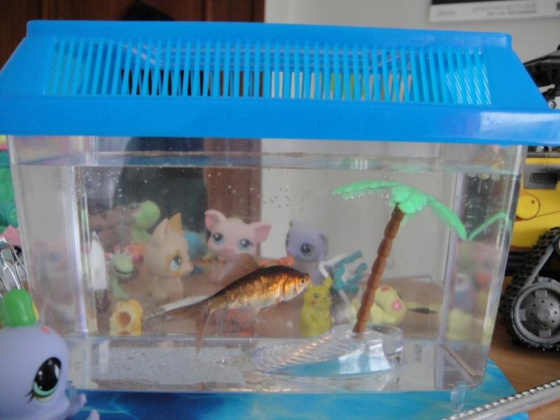 L 39 histoire de mes poissons rouges for Poisson rouge plastique