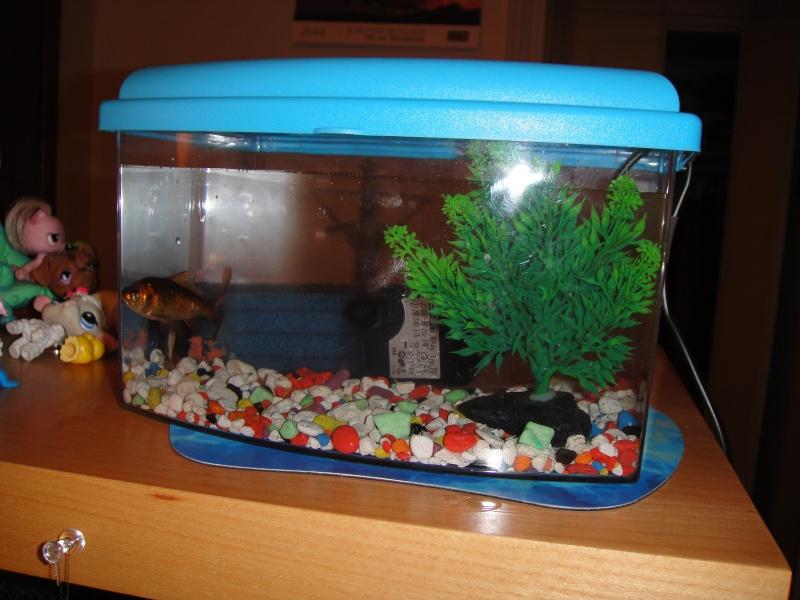 L 39 histoire de mes poissons rouges for Boutique aquariophilie