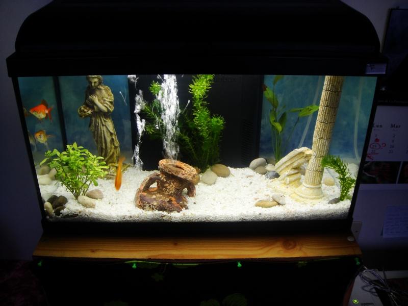 L 39 histoire de mes poissons rouges for Aquarium 96l poisson rouge