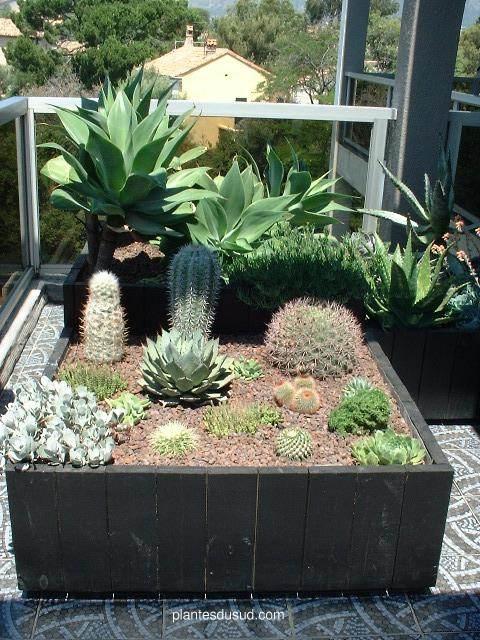jardin mexicain. Black Bedroom Furniture Sets. Home Design Ideas