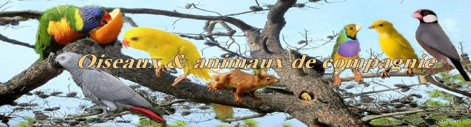 Oiseaux et  animaux de compagnie