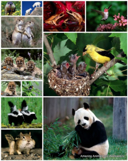 100 Amazing Animals Wallpapers 2