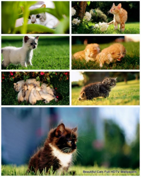 50 Beautiful Cats Full HDTV Wallpapers