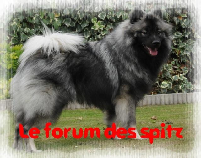 Le forum des Spitz