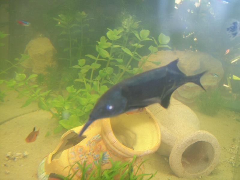 Voile blanc sur poisson elephant for Bac hopital poisson