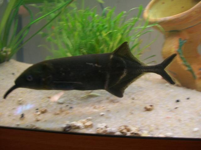 le plus beau poisson de votre aquarium page 3