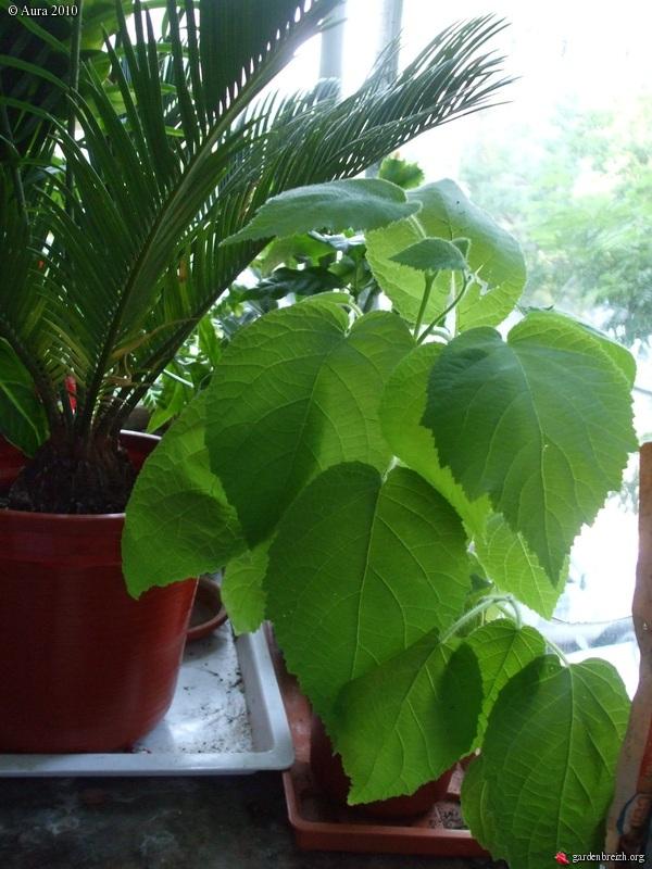 Mes plantes exotiques obtenues de graines for Plantes exotiques