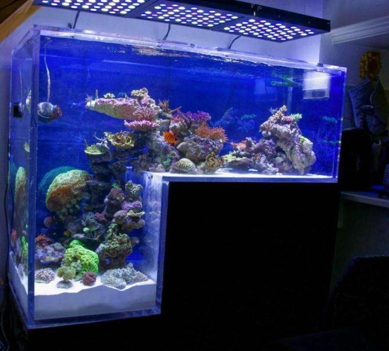 aquarium fosse. Black Bedroom Furniture Sets. Home Design Ideas