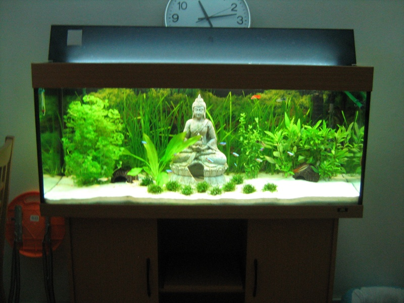 Decoration Zen Aquarium : Mettre du gazon artificiel page