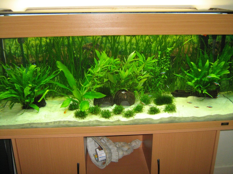 gazon artificiel aquarium