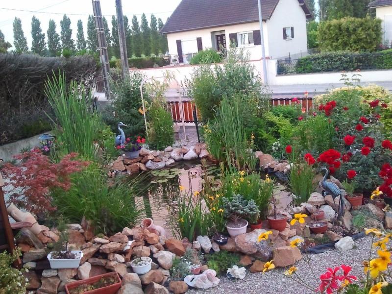Nos plantes autour du bassin les calinous - Plantes bassin de lagunage aixen provence ...