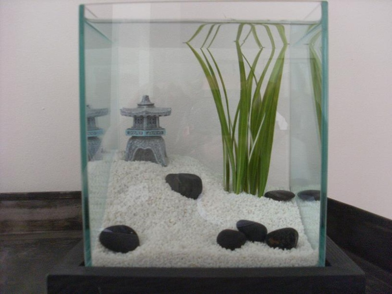 Mes d cos d 39 aquarium - Zen kamer deco idee ...