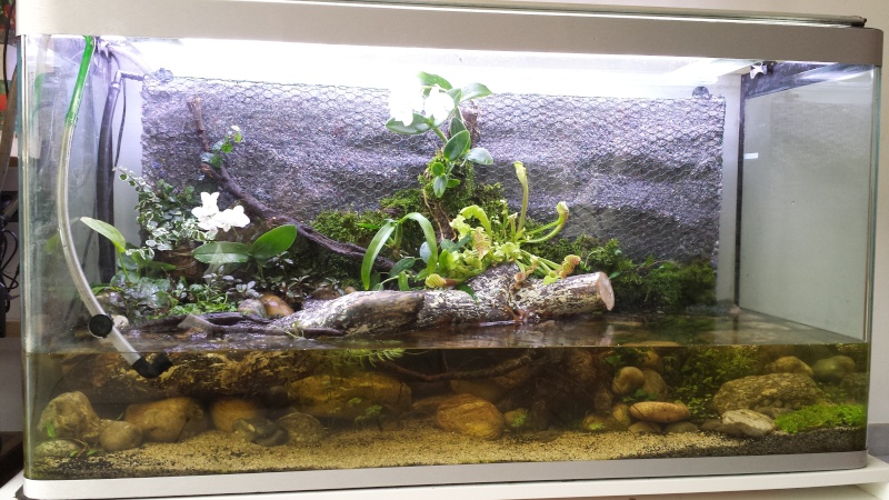 Mur v g tal avec aquarium de 320l paludarium page 13 for Mur vegetal aquarium