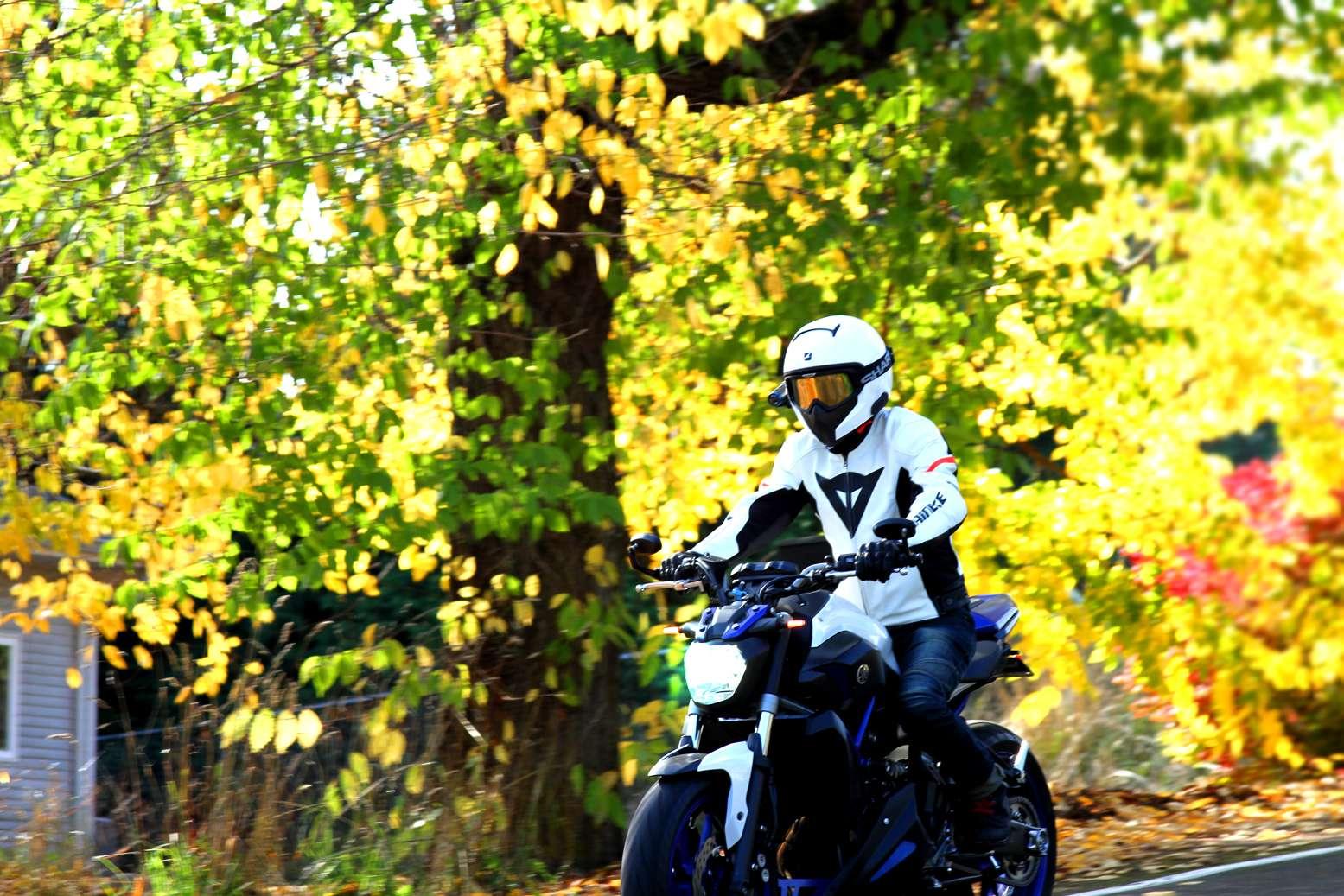 fall310.jpg