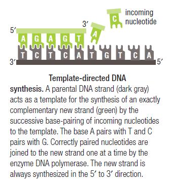 Dna replication of prokaryotes pronofoot35fo Choice Image