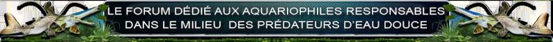 Amazonia - Predators