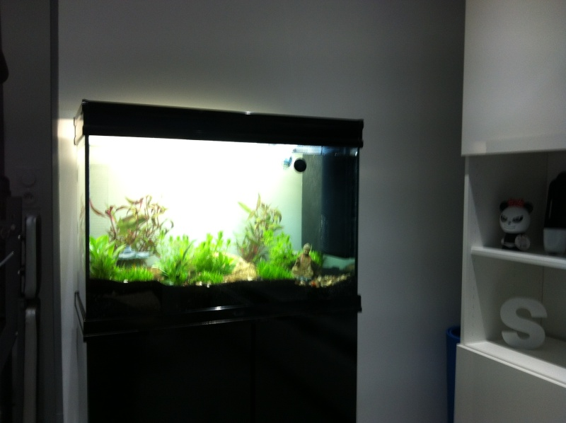 aquarium de 120 litres. Black Bedroom Furniture Sets. Home Design Ideas