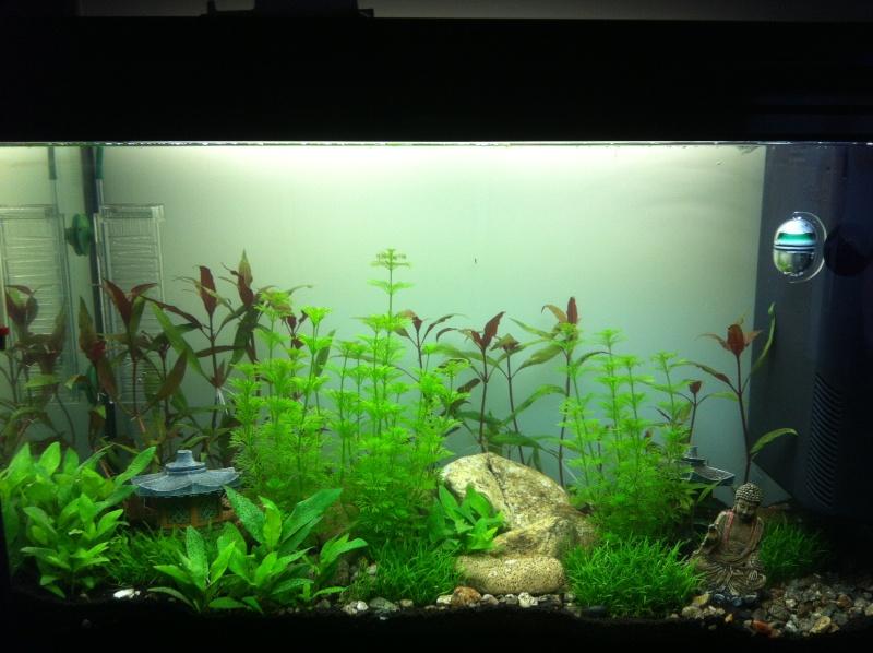 aquarium plusieurs jours après sa mise en route