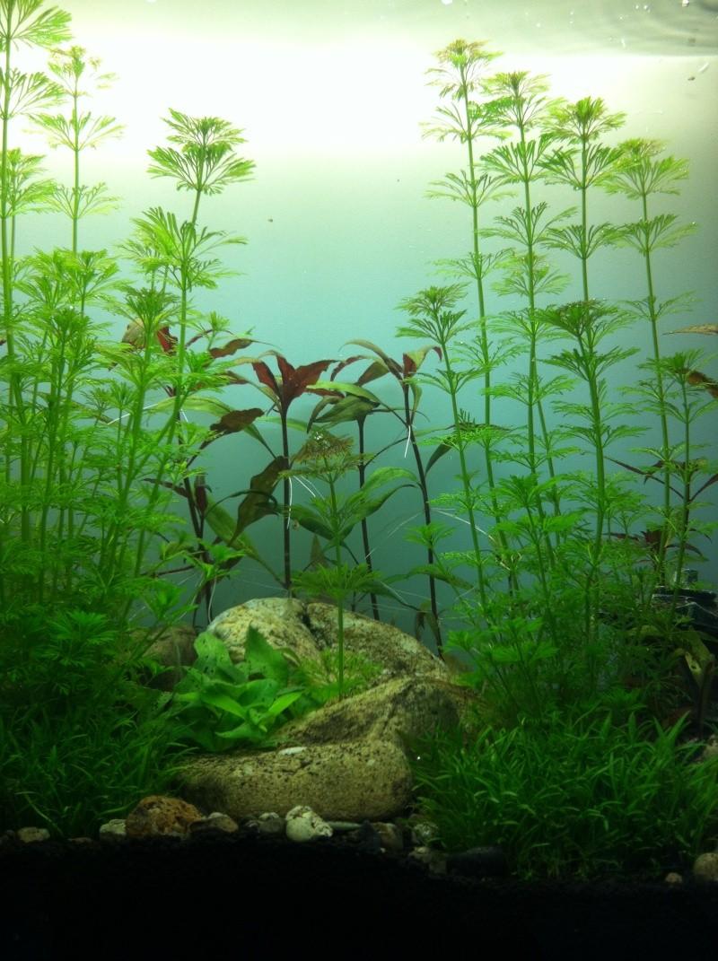 aquarium quelques jours après son lancement