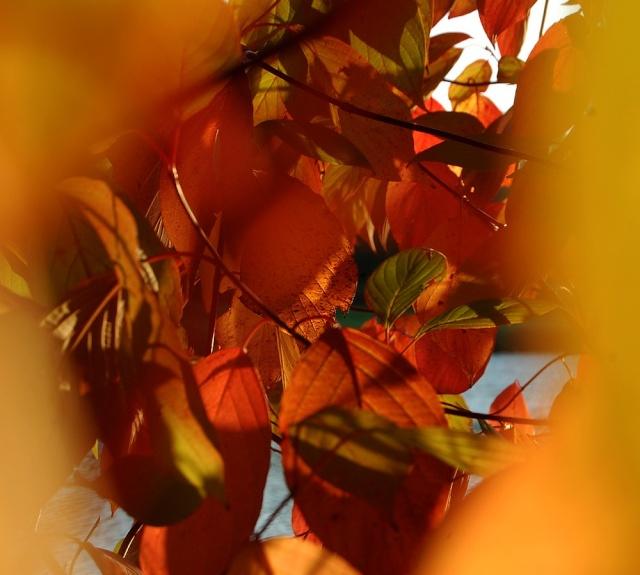 Ambiance automne 2015 page 4 for La vie claire la ciotat