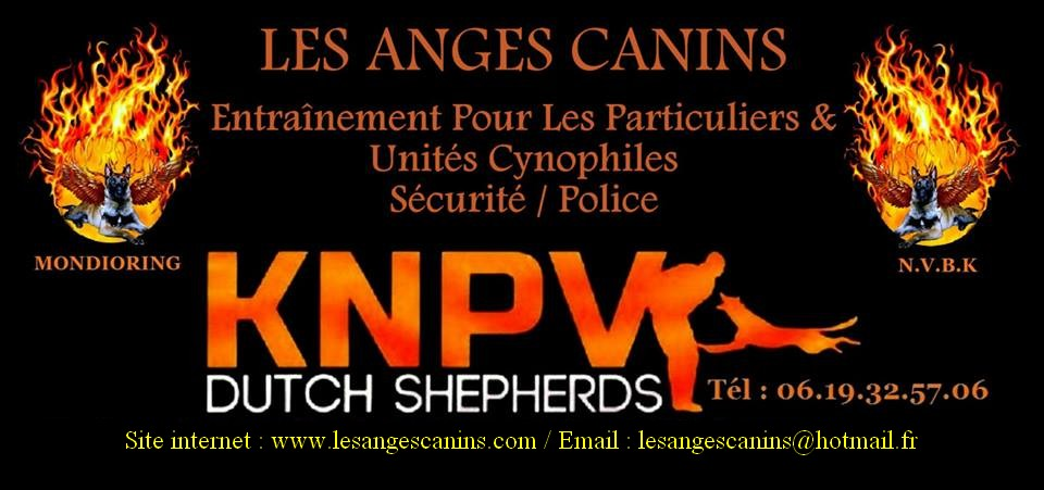 LES ANGES CANINS