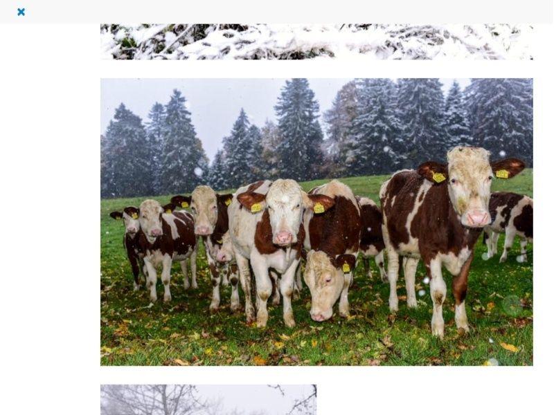 Rencontre en suisse jura
