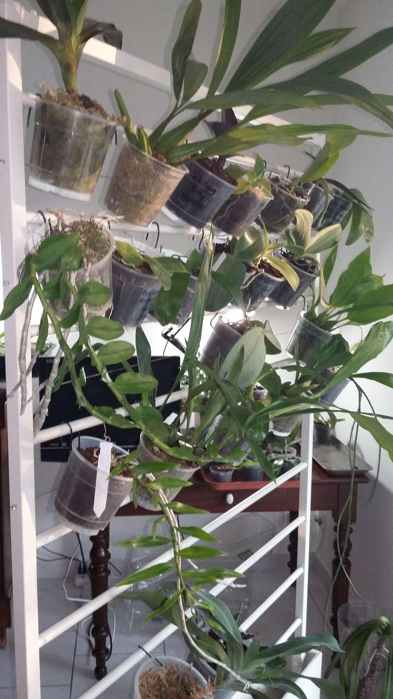 Cloison amovible vegetale cloison amovible vegetale with for Cloison amovible hupsos
