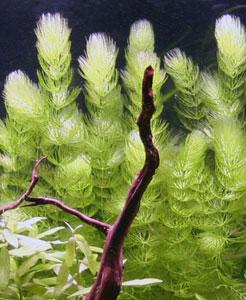 Recherche de plantes for Recherche plante