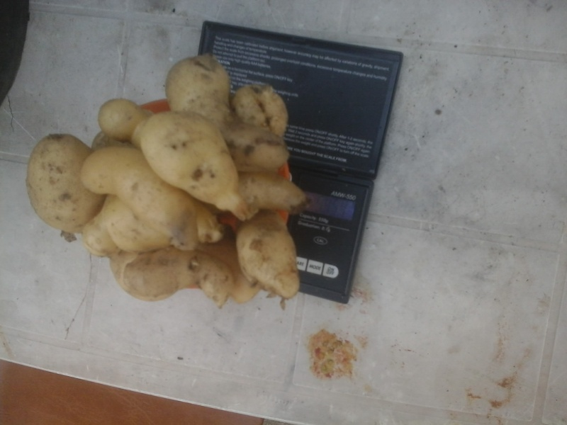 Comment cultivez vous vos patates - Comment planter des patates ...