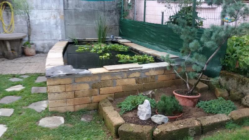 Piccolo laghetto for Laghetti nei giardini