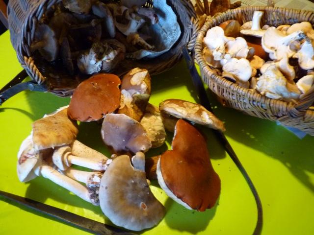 Résultat d'images pour champignos de saison