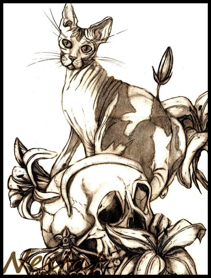dessin chat crane