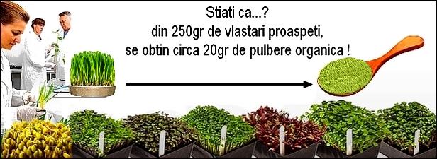 http://i21.servimg.com/u/f21/19/17/38/41/vlasta15.jpg