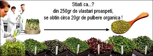 http://i21.servimg.com/u/f21/19/17/38/41/vlasta17.jpg
